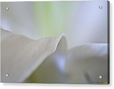 Acrylic Print featuring the photograph Lily I by Kathy Ponce