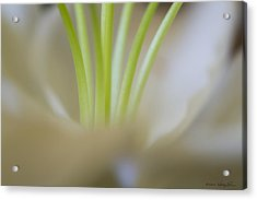 Acrylic Print featuring the photograph Lily II by Kathy Ponce