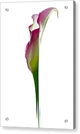 Acrylic Print featuring the photograph Lily by Jonathan Nguyen