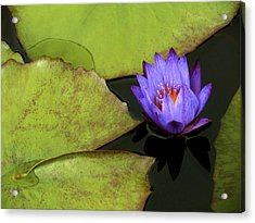 Lily- Leaves- And Love Acrylic Print