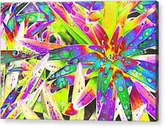 Lily Leaves Raindrops Acrylic Print by Carol Lynch