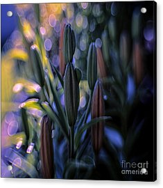 Lily Light Acrylic Print by Jean OKeeffe Macro Abundance Art