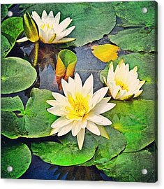 #lily #lilies #pad #lilypads Acrylic Print