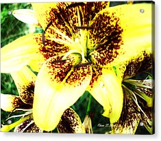 Acrylic Print featuring the photograph Lily Love by Shana Rowe Jackson