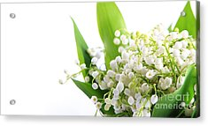 Lily Of The Valley Art Acrylic Print by Boon Mee