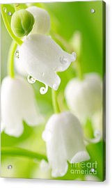 Lily Of The Valley Acrylic Print by Boon Mee