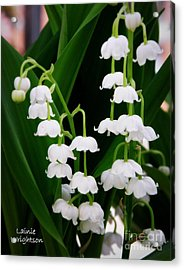 Lily Of The Valley Acrylic Print by Lainie Wrightson