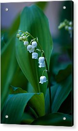 Acrylic Print featuring the photograph Lily Of The Valley by Wayne Meyer
