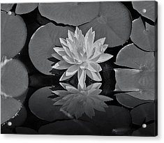 Lily On The Pond Acrylic Print