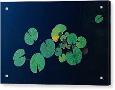 Lily Pad 2 Acrylic Print