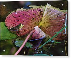 Lily Pad Beauty Acrylic Print by Joy Bradley