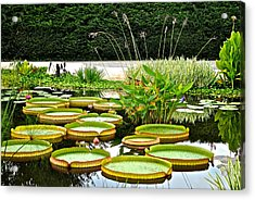 Lily Pad Garden Acrylic Print by Frozen in Time Fine Art Photography