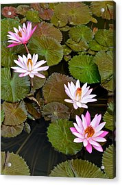 Lily Pad Haven Acrylic Print by Frozen in Time Fine Art Photography