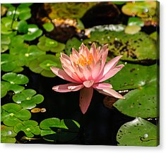 Acrylic Print featuring the photograph Lily Pad by John Johnson