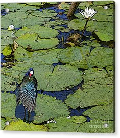 Lily Pad With Bird2 Acrylic Print