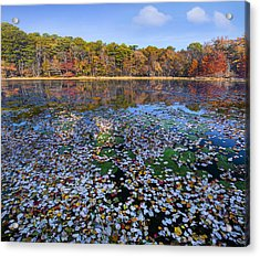 Lily Pads And Autumn Leaves Acrylic Print