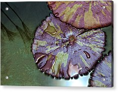 Lily Pads And Papyrus Reflection Acrylic Print