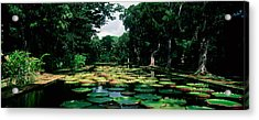 Lily Pads Floating On Water Acrylic Print
