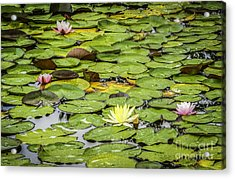 Lily Pads II Acrylic Print
