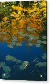 Lily Pads In Autumn Acrylic Print by Bruce Thompson