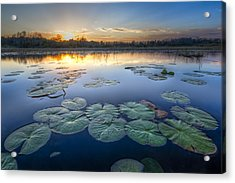 Lily Pads In The Glades Acrylic Print by Debra and Dave Vanderlaan