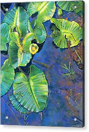 Lily Pads Acrylic Print by Nick Payne