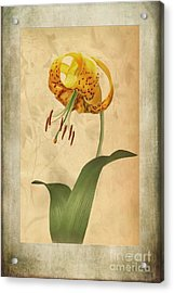 Lily Painting With Textures Acrylic Print by John Edwards