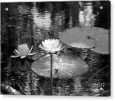 Lily Pond 2 Acrylic Print by Anita Lewis