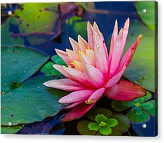 Acrylic Print featuring the photograph Lily Pond by John Johnson