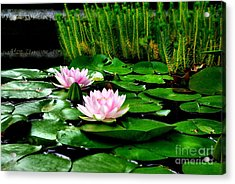 Acrylic Print featuring the photograph Lily Pond by John S