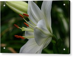 Acrylic Print featuring the photograph Lily Pure by Denyse Duhaime