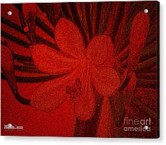 Lily Red Acrylic Print
