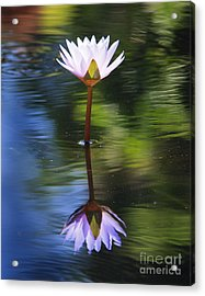 Lily Reflection Acrylic Print