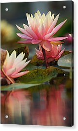 Lily Reflections 2 Acrylic Print