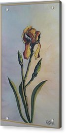Lily Sold Acrylic Print