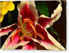 Lily Rose Flower 2 Acrylic Print