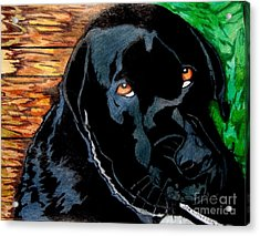 Lily The Dog Acrylic Print
