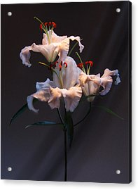 Lily Variation #01 Acrylic Print