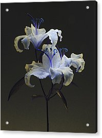 Lily Variation #03 Acrylic Print