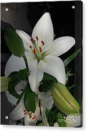 Lily White Acrylic Print