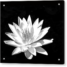 Lily#2 Acrylic Print by Joe Bledsoe