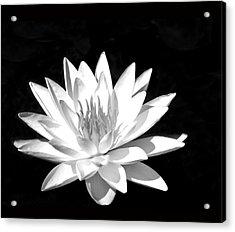 Lily#2 Acrylic Print by Joe Bledsoe