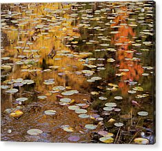 Lilypads And Reflection-h Acrylic Print