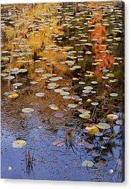 Lilypads And Reflection Acrylic Print
