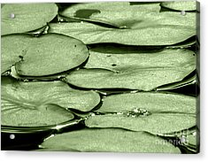 Lilypads Acrylic Print by Roselynne Broussard