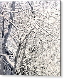 Limbs Covered With Snow Acrylic Print