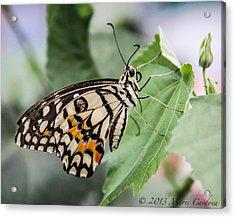 Lime Butterfly Acrylic Print by Marie  Cardona