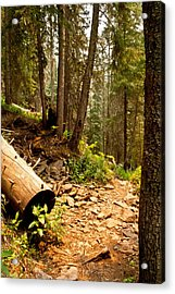 Acrylic Print featuring the photograph Lime Creek Trail by Jessica Tookey