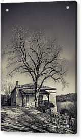 Lime Tree Acrylic Print by Tony Priestley