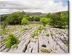 Limestone Pavement Above Austwick Acrylic Print by Ashley Cooper